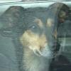 Weitreichendes Gerichtsurteil: Rettung von Tieren aus dem Ausland ist Tierschutz und kein Handel
