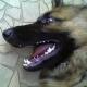 Hund biss Mann ein Drittel der Nase ab