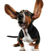 Hundeführerschein: Die Deutschen und ihr Regulierungswahn