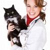 Chronische Nierenerkrankung (CNE): Weit verbreitetes Gesundheitsproblem bei Katzen