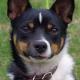 Was Hunde wollen: Was denkt Ihr Hund, wenn er Sie ansieht?