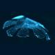 US Forscher erschaffen künstliche Qualle