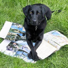 Reisen mit dem Hund: Die Checkliste