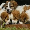 Giardien: Tipps und begleitende Hygienemaßnahmen für Hundehalter