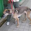 Trauriges Ende eines Hundeleben: 2 Hamburgerinnen lassen Hund verhungern