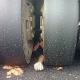 Demonstrant in China von Straßenwalze getötet