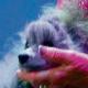 Hund stirbt bei Lanz´ erster