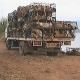 300 Hunde vor dem Kochtopf bewahrt