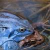 Friedhof der Gruseltiere: Von Piratenspinnen, Uferwanzen und Sumpfschrecken