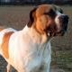 Wachhund (!) von Lagerplatz gestohlen