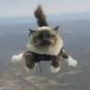 Fallschirmspringende Katzen sorgen für Aufregung