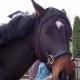 Polizei ermittelt einen psychisch kranken Heranwachsenden als Pferdequäler