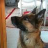 Kurz vor Einschläferung: Polizist entführt totgeweihten Hund