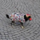 Karneval / Fasching: Kein Spaß für Heimtiere?