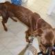 Hund verhungern lassen: 1 Jahr Hundehalteverbot im Urteil