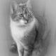 Tipps für Katzen bei Gewitter