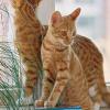 Freilaufkatzen: Nachbartiere auf Abstand halten