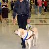 Gesunder Blindenhund wegen Testament getötet