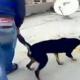 Tierquälerei bei Facebook veröffentlicht: Mann wirft Hund vom Dach