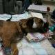 Couragierte Hundehalter fassen Giftköderleger in flagranti: