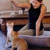 Wenn Katzen ihre Krallen wetzen