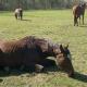 Gnadenhof und Wildtierrettung Lehnitz: Notpferde