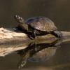 Welt-Schildkröten-Tag: Viele Arten gefährdet - Haustiere brauchen Pflege