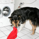 Flohspeichelallergie: Alarmstufe Rot für sensible Hunde