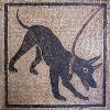 Tipps zum Gewöhnen an Hundehalsband und Hundeleine