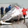 Auch Transitverbot für Walfleisch gefordert
