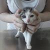 Internationaler Tag der Katze: Streunerkatzen in Deutschland leiden
