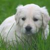 Pfotenhilfe Tierheim Lochen: Tag der offenen Tür