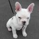 Hundehaftpflicht: Wie wichtig und sinnvoll eine Hundehaftpflichtversicherung ist