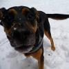 So schützen Sie Ihren Hund im Winter