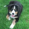 Tipps für Hunde bei Gewitter