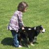 Versicherung für Hundehalter