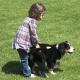 Einen Hund tierisch gut erziehen – Alternative Hundeerziehung