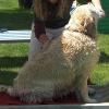 Haut- und Fellpflege bei Hunden und Katzen