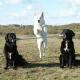 Mehr Hunde – mehr Glück: Tipps für eine harmonische Mehrhundehaltung