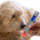Lasertherapie in der Tiermedizin