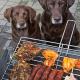 Kein Grillfleisch für Hunde