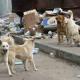 Tierschützer warnen: Füttern und falsche Fürsorge kann für Straßenhunde gefährlich werden
