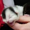Weltkatzentag 8. August: Kastrations- und Registrierungspflicht gefordert