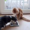 Bitte lächeln: Katzen Selfies liegen im Trend