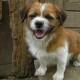 Pfötchen Asyl: Hoffnung für in Not geratene Hunde