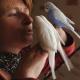 Ziervögel können in Außenvoliere überwintern