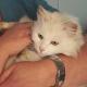 Gesund durch die richtige Ernährung: Krankheitsbilder bei Katzen durch BARF verbessern