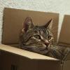Das richtige Spielzeug für die Katze