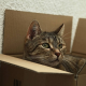 Zecken und Flöhe: Hunde und Katzen regelmäßig nach Ungeziefer absuchen
