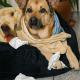 Hunde können sich genauso erkälten wie Menschen